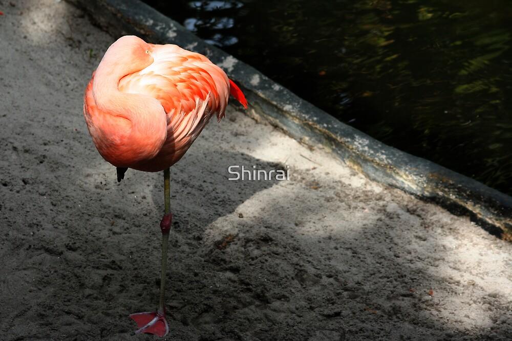 Flamingo Flower by Shinrai