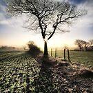 Winter Ash  by Chris Charlesworth