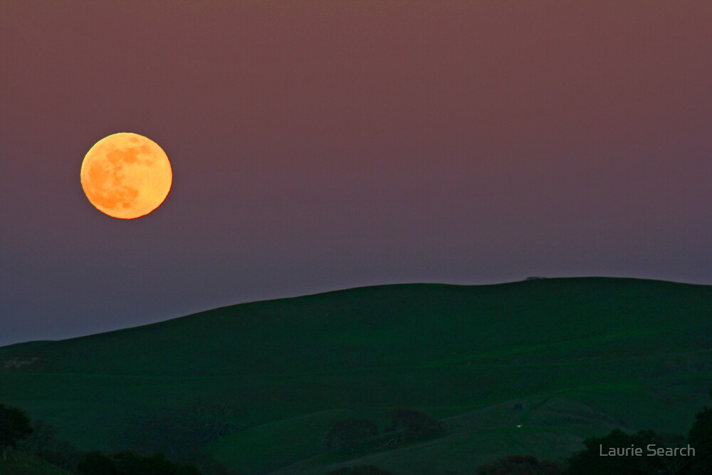Moonlit Night by Laurie Search