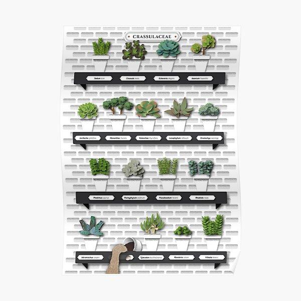 Crassulaceae Poster