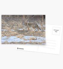 Quixotic Coyote Postkarten