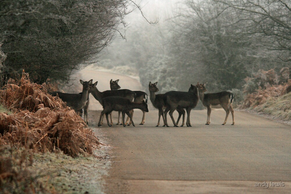 Frosty Morning Heard by andy lewis