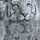 Head above the water by Samantha Norbury