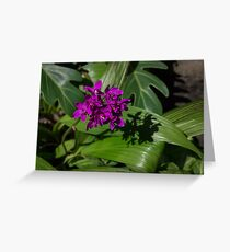 Ultra Violet Orchid Cluster - Exotic Tropical Shadows Greeting Card