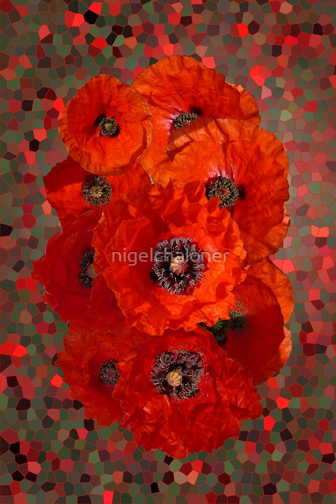 Poppies by nigelchaloner