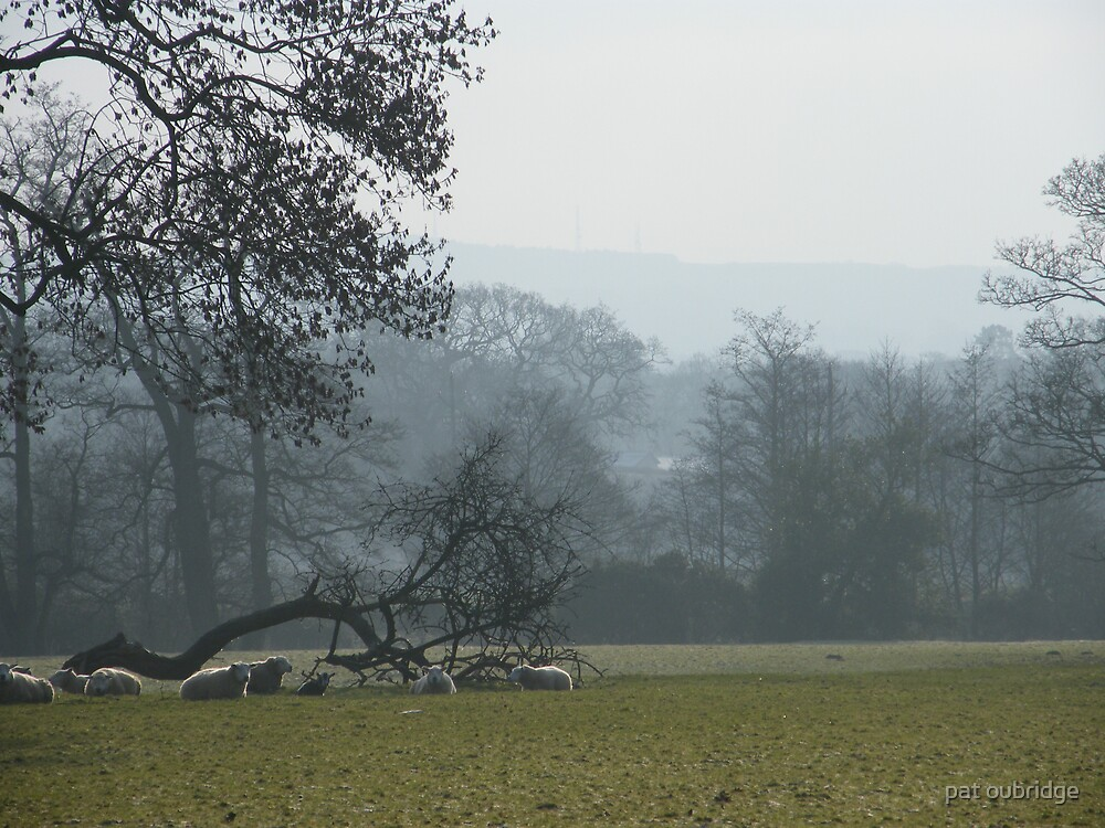 Cold Misty Morning by pat oubridge