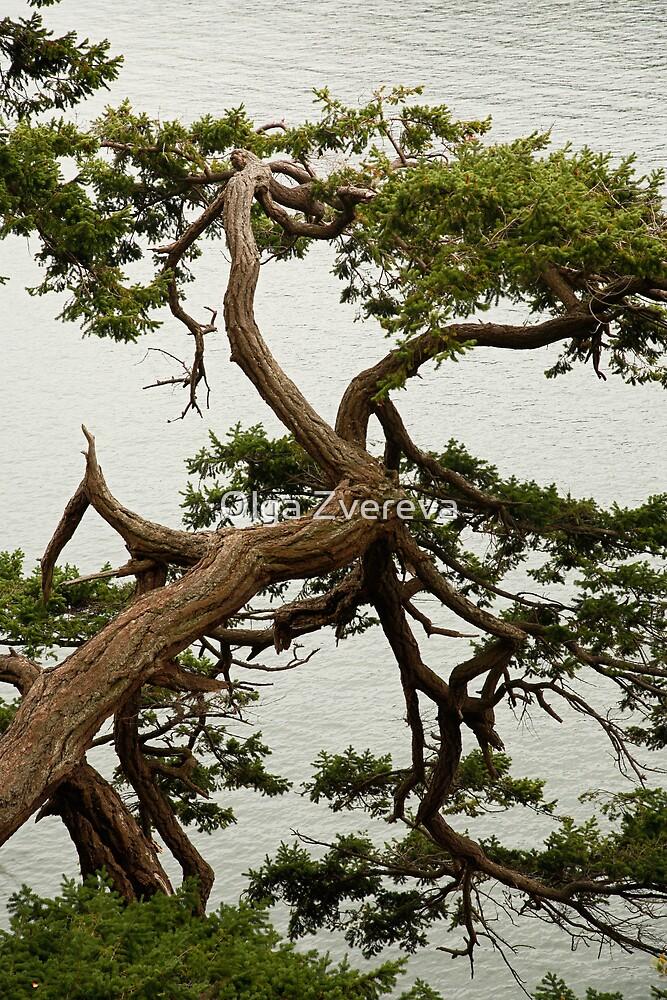 Tree by Olga Zvereva