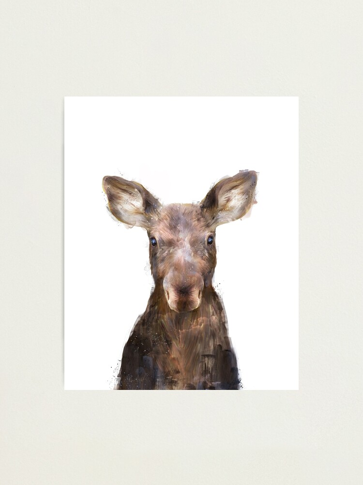 Alternate view of Little Moose Photographic Print