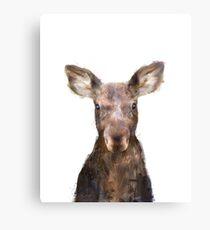 Little Moose Canvas Print