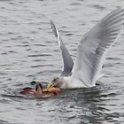 """What's for dinner, Mrs. Gull?"" by David Friederich"