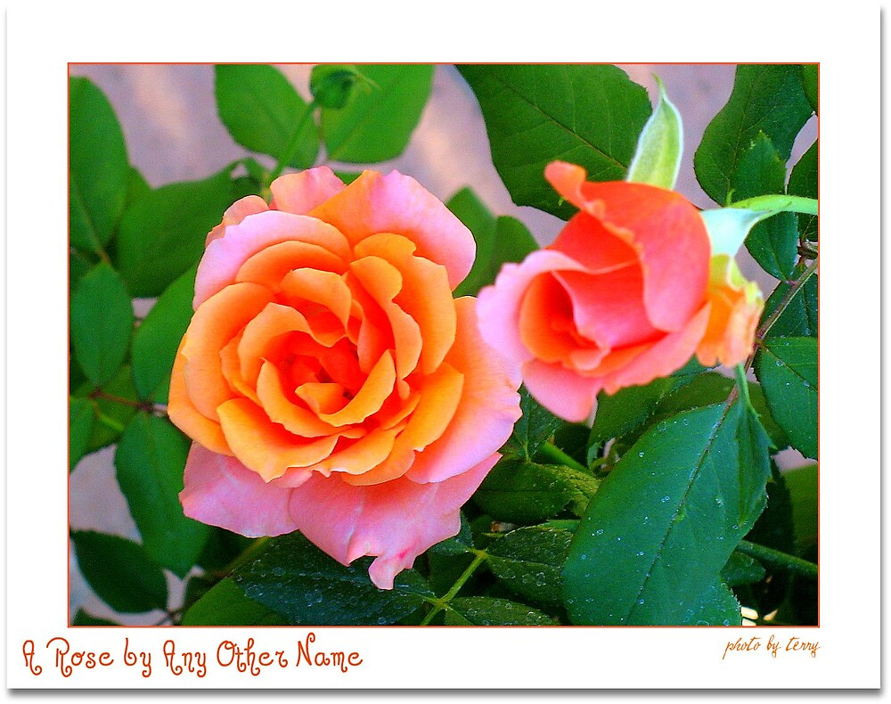 A Rose by Any Other Name by Terry Temple