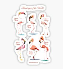 Flamingos of the World Sticker