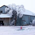 Snow in Rural Texas by Sherryll  Johnson