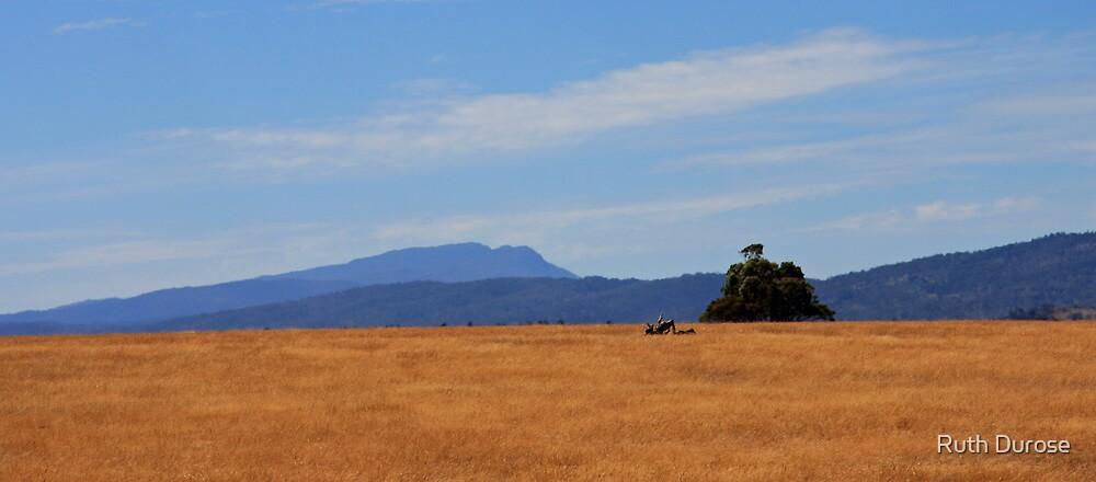 Summer - Northern Tasmania by Ruth Durose