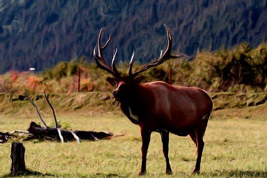 Moose by dmark3