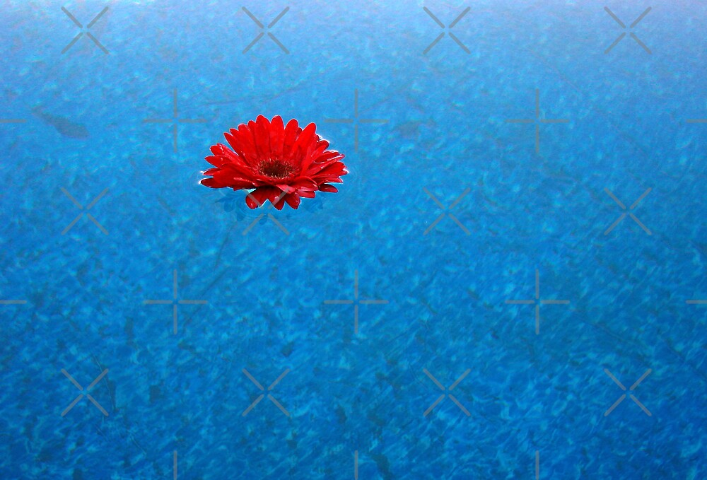 Flower Afloat by Kimberly Miller