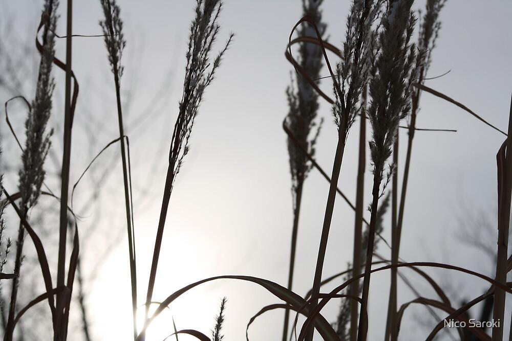 weeds by Nico Saroki