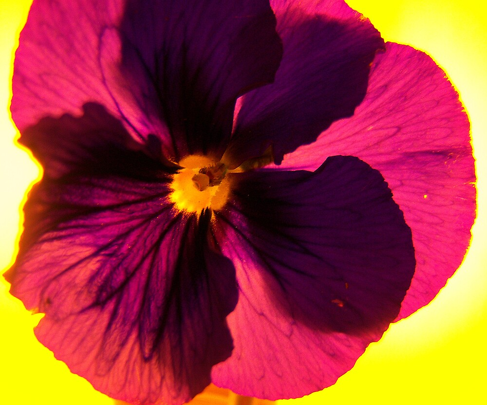 Pansy Shine by DottieDees