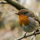 Winter Robin by Martina Fagan