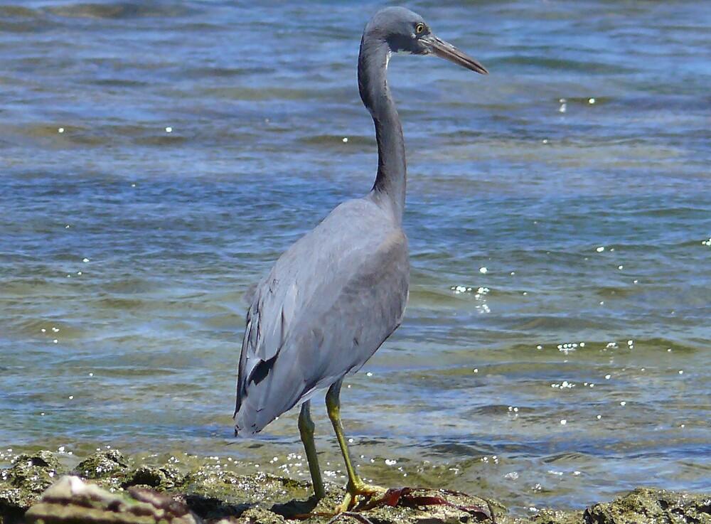 crane by robinof