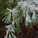 Winter Pine by debfaraday