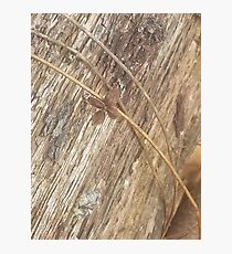 Nature's Ribbon and Bow Photographic Print