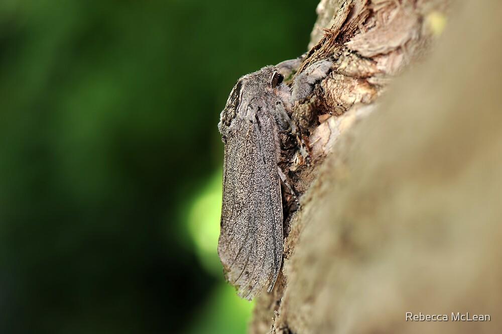 Moth Macro by Rebecca McLean