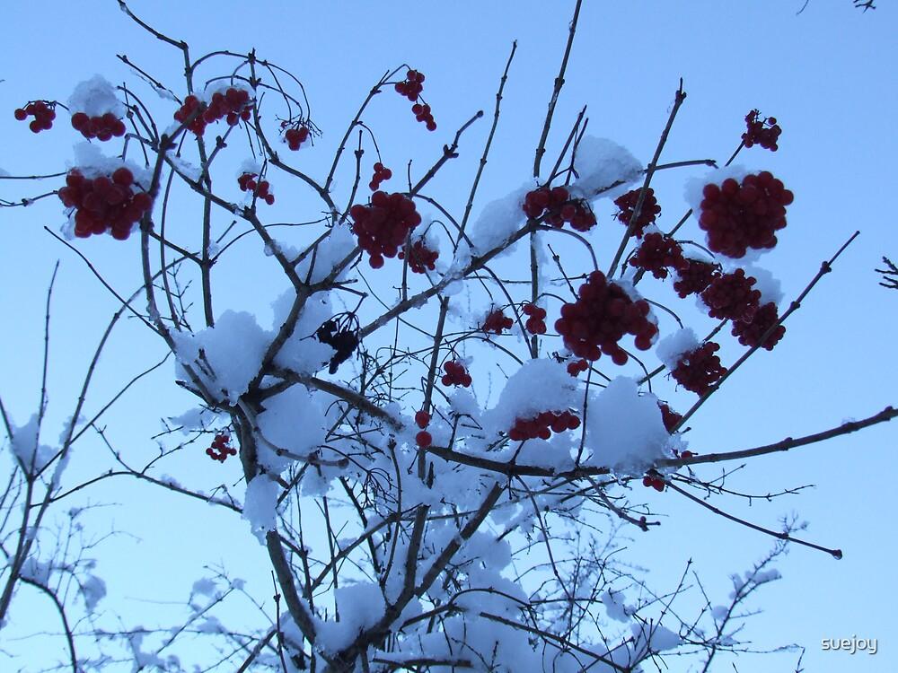 red berries by suejoy