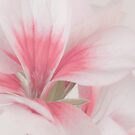 Pollen Showered Geranium Blossom Macro by Sandra Foster