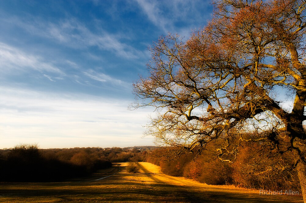 Epping Forest by Lea Valley Photographic