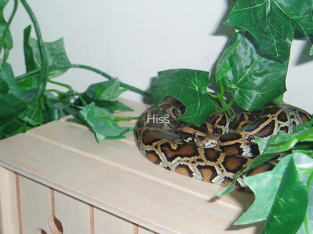 Burmese Python by Hiss