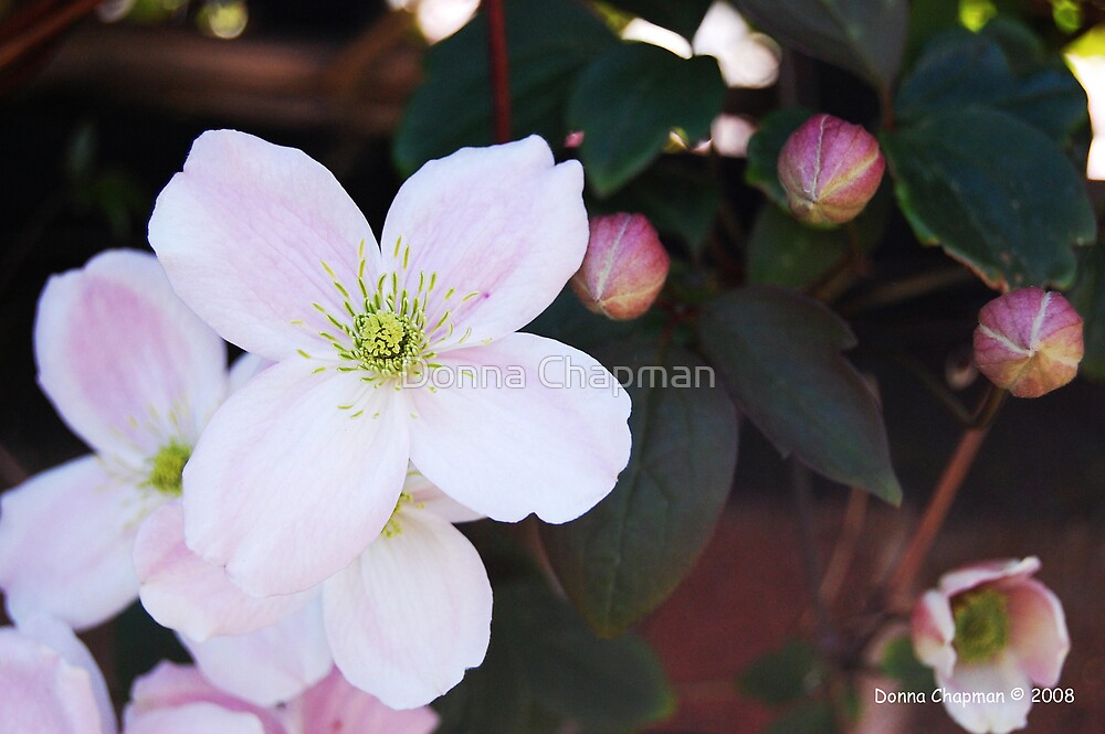 Pink Flowers by Donna Chapman