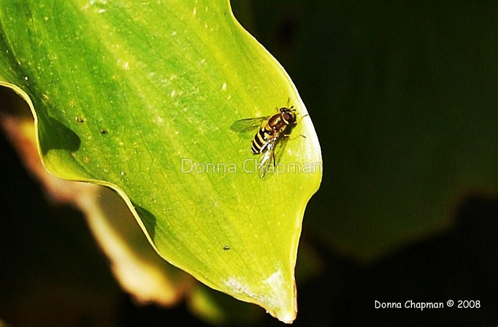 Wasp On A Leaf by Donna Chapman