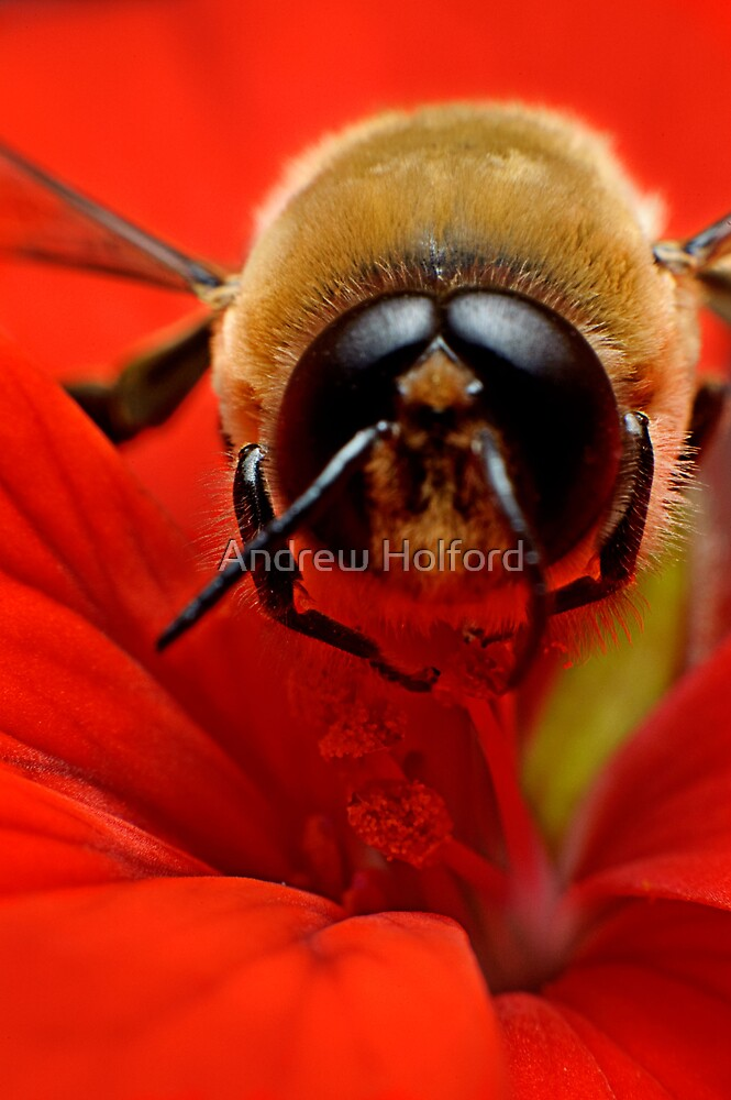 Honey Bee I by Andrew Holford