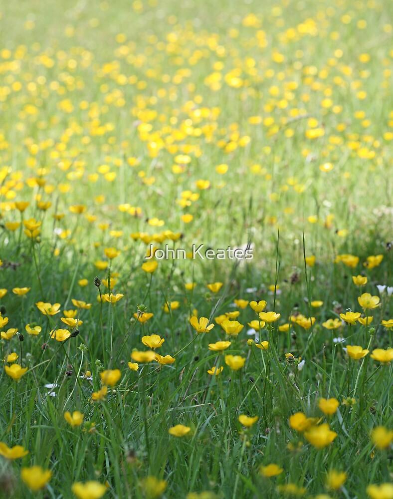 A field of Buttercups by John Keates