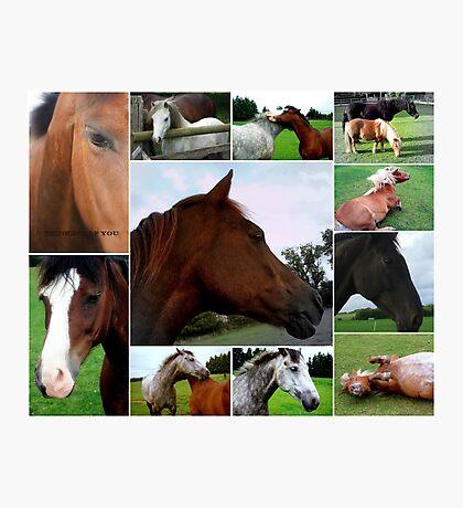 Collage Of Horses Photographic Print