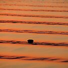 Water Ripples by Mark Lindsay