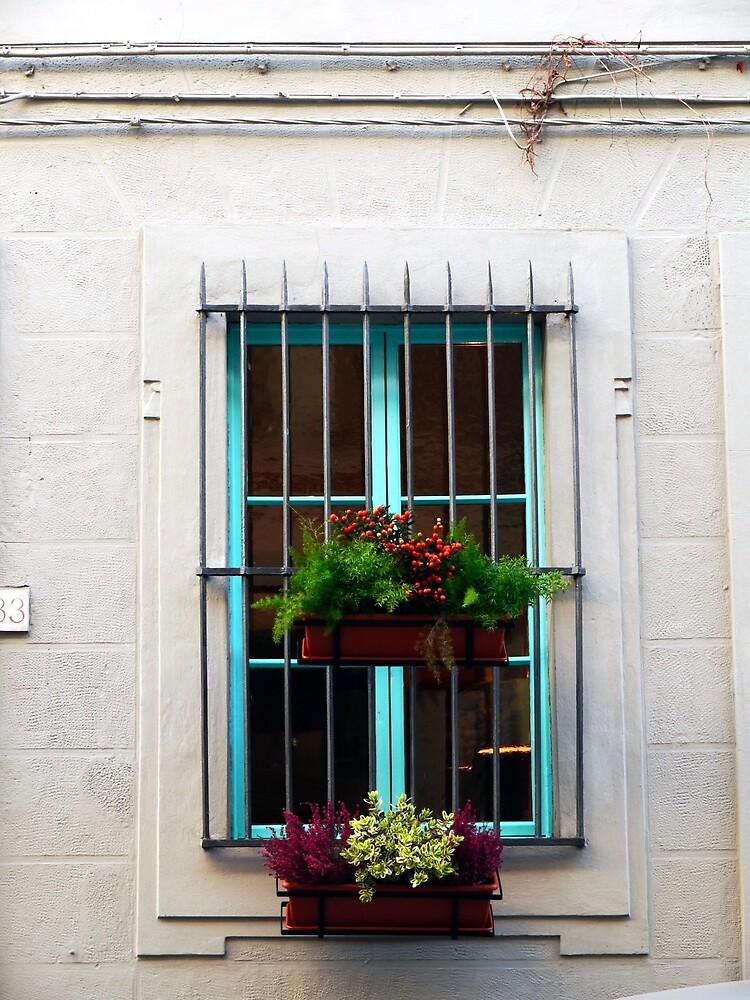 Window Plants by Rae Tucker