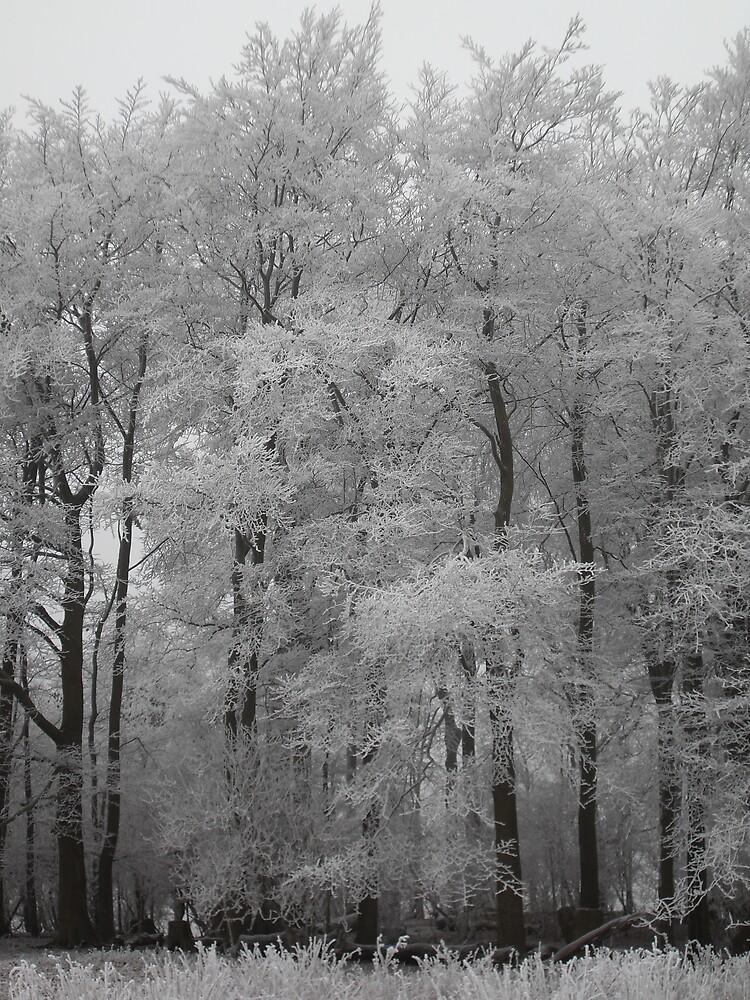 Winter's Touch by stevetg101