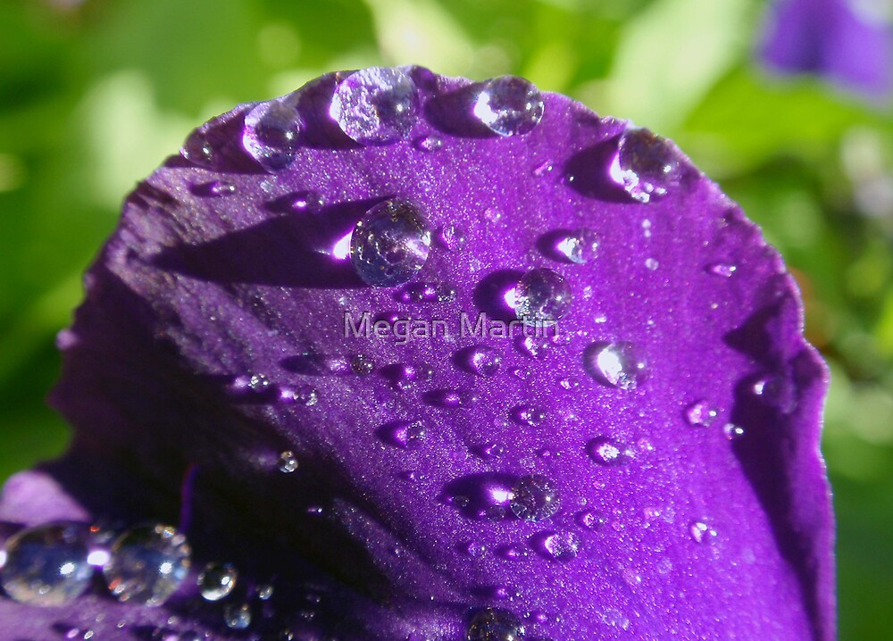 Purple Rain by Megan Martin