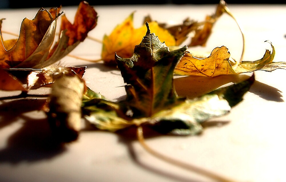 """Fall Colors """"Change"""" by Mandy Keller"""