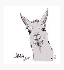 Lama und Alpakas - die neuen Einhörner? Fotodruck