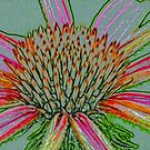 Coneflower by chance27