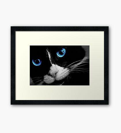Blue Eyes Cat Framed Print