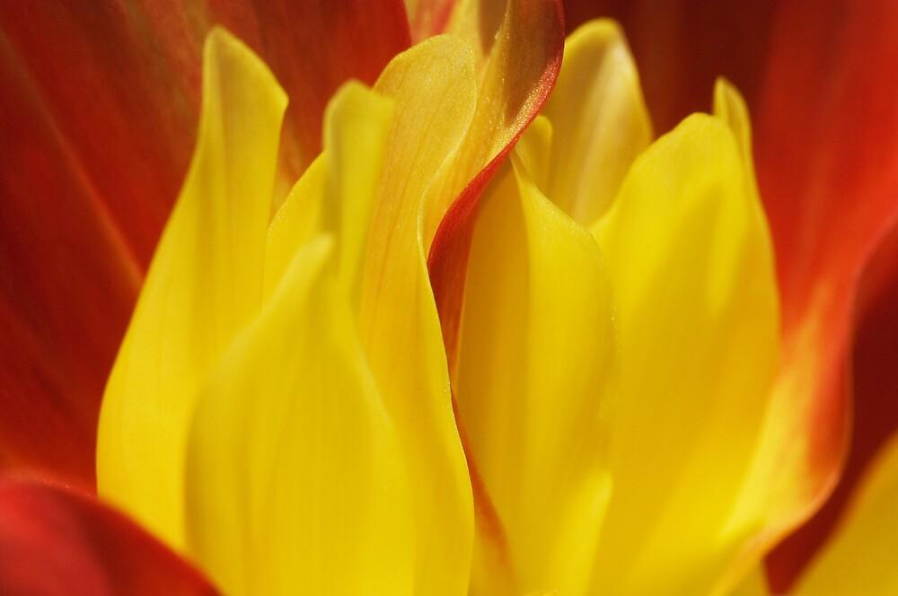 Flame by Carol Saunders