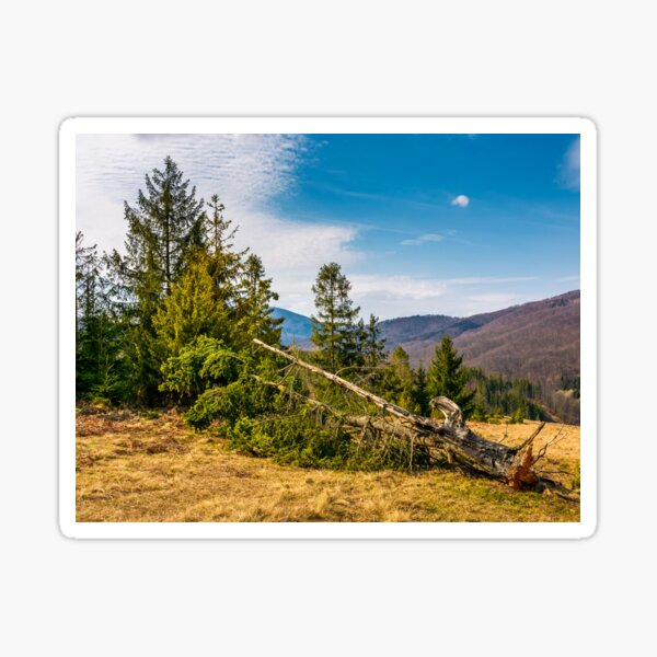 fallen spruce tree on forested hills in springtime Sticker