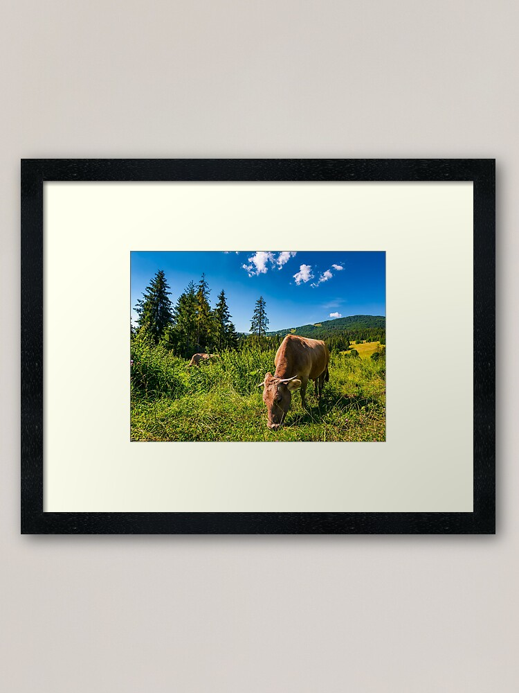 Alternate view of cow grazing in a tall grass near the forest Framed Art Print