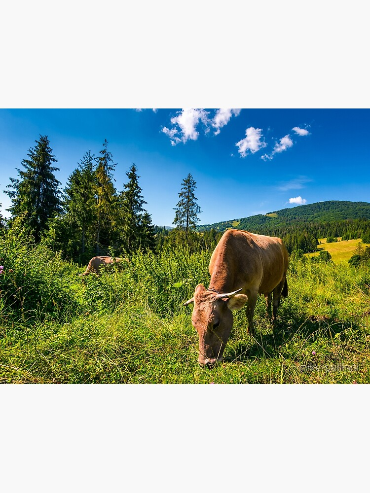 cow grazing in a tall grass near the forest by mike-pellinni