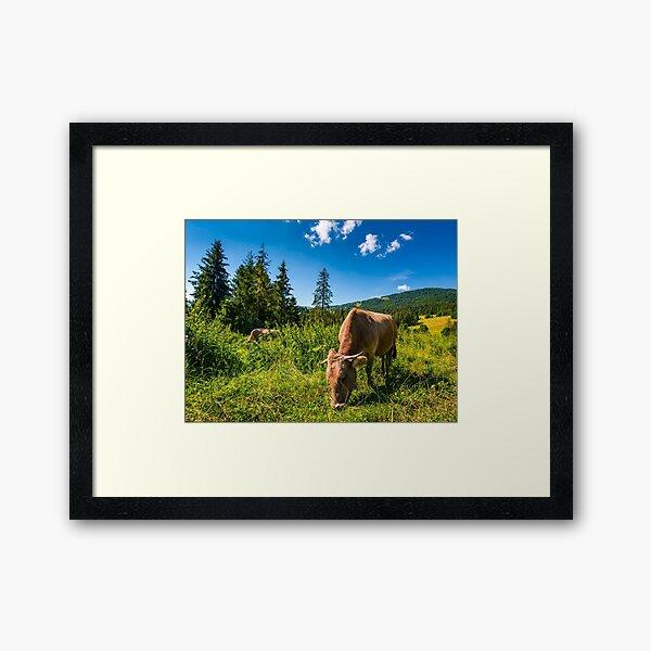 cow grazing in a tall grass near the forest Framed Art Print