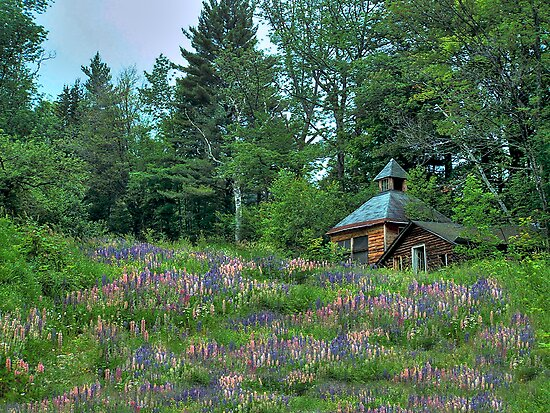 Lupine and Cabin by Wayne King